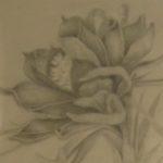 GallenLiptonJane_Flower1_Cropped