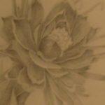 GallenLiptonJane_Flower2_Cropped